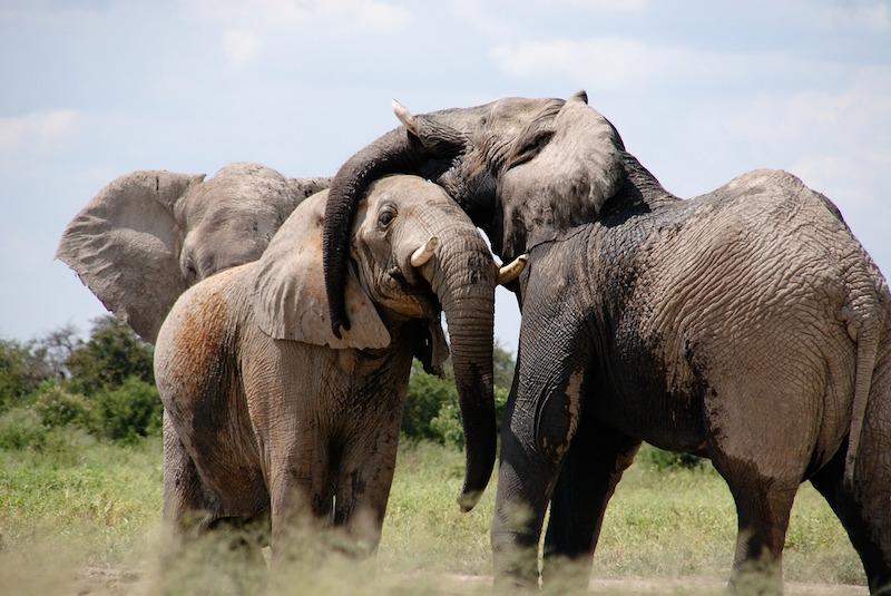 تمكين صانعي السياسات الأفريقيين لمكافحة الاتجار في الحياة البرية