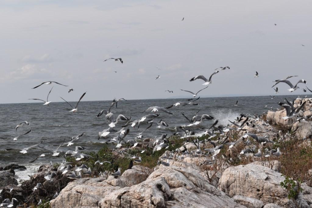 Uganda's Musambwa Island, the World's Largest Breeding Colony for Grey-headed Gulls, Devastated by Floods amid Coronavirus Pandemic